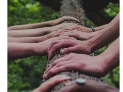 mani su un tronco